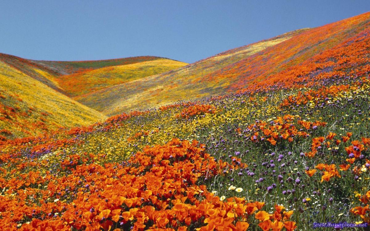 Flores-naranjas-del-Himalaya